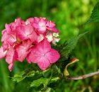 Amazing Health Benefits of Flowers
